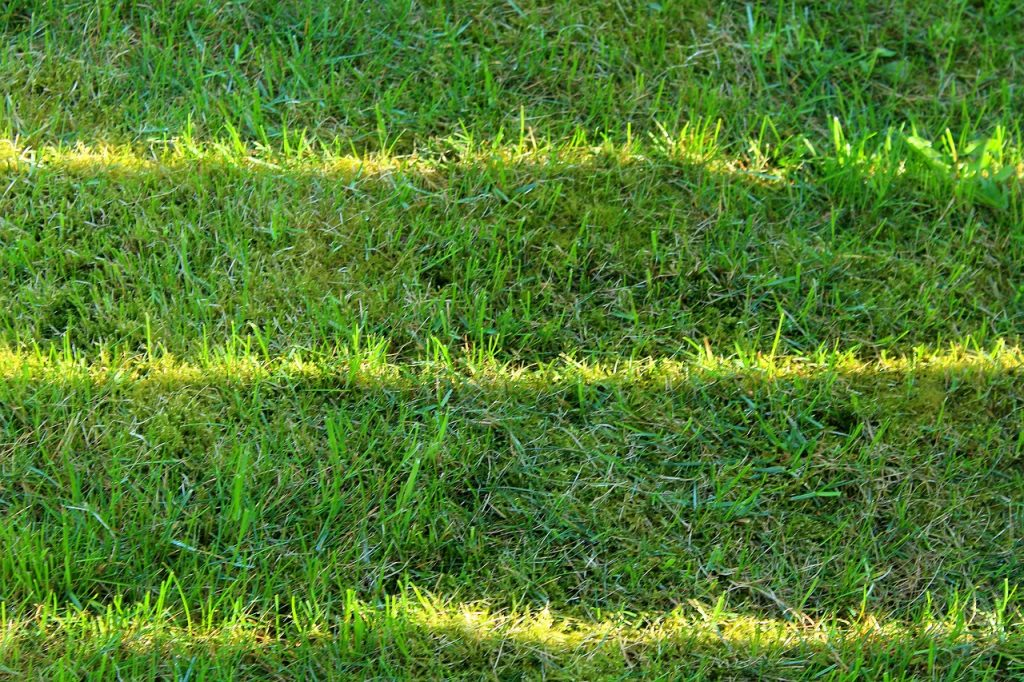 Four tips for maintaining your lawn