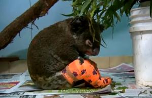 Australian bushfires kill over a billion animals, scientist says
